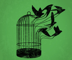birds, freedom, and peace image