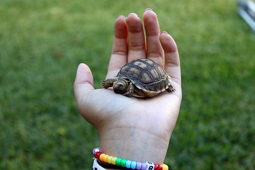 turtle, animal, and photography image