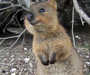 adorable, world, and animal image