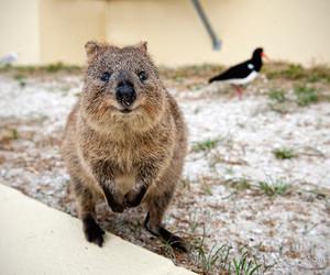 adorable, animal, and world image