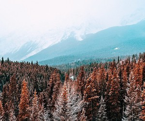 nature, forest, and travel image