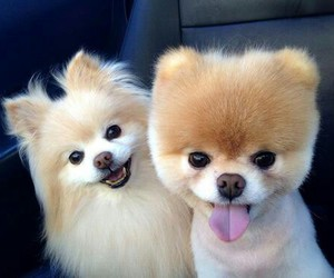 animals, cutie, and dogs image