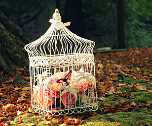 flowers, cage, and butterfly image
