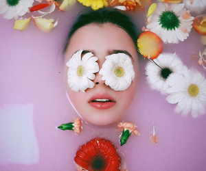 beauty, blossoms, and daisy image