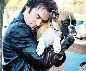 beauty, boxerdog, and iansomerhalder image
