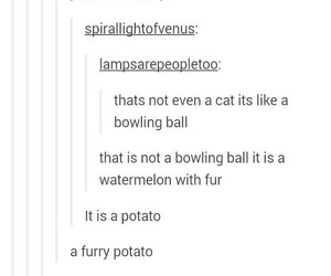 bowling, cat, and funny image