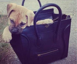 dog, bag, and cute image