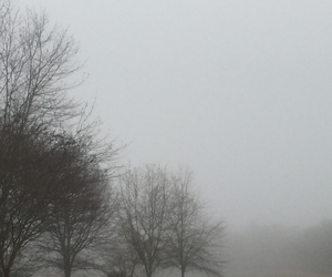 dark, nature, and fog image