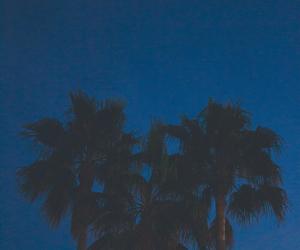 moon, night, and palmas image