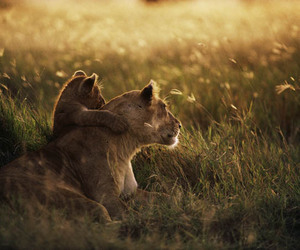 animals, family, and cute image