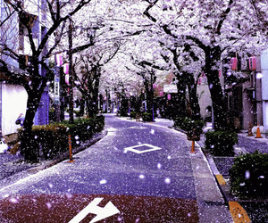 japan, purple, and sakura image