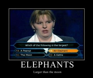 funny, elephant, and moon image