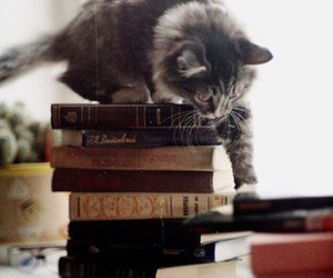 book and cat image