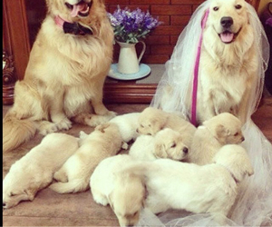 dogs, family, and happy image