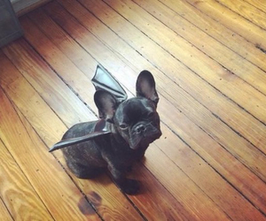 bat, cute, and dog image