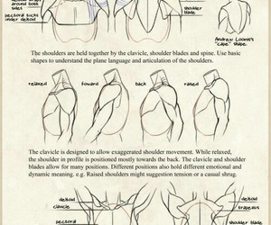 drawing and shoulders image