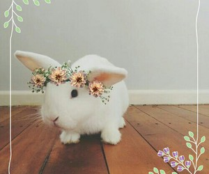 animals, cute, and crown image