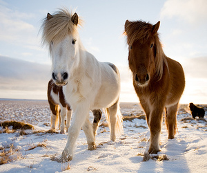 ponies and cute image