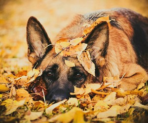 autumn, beautiful, and my love image