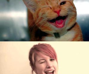 hayley williams, cat, and paramore image