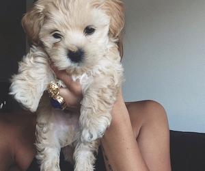 dog, life, and cute image
