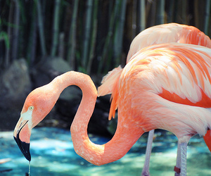 animal, flamingo, and pink image