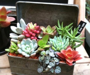 beautiful and succulent image