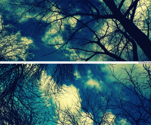 sky, tree, and photography image