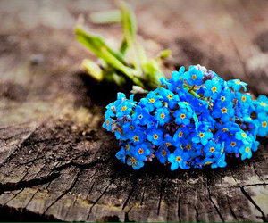 blue, flowers, and spring image