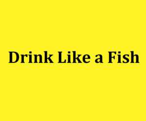 drink, fish, and funny image