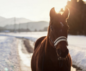 horse, animal, and snow image