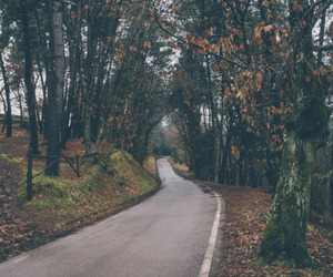 road, tree, and nature image