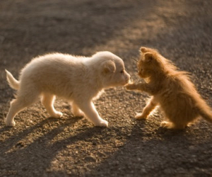 cute, kitten, and puppy image