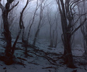 forest, snow, and dark image