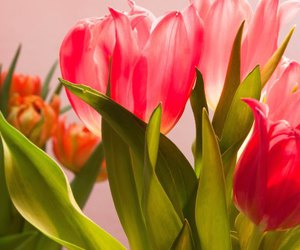 flowers, free, and public domain image