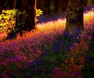 forest, sunrise, and lavender image