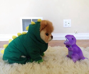 baby dog, dressed, and dinosaurs image