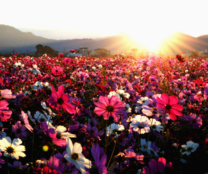 flowers, sun, and pink image