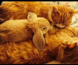 cats, rabbit, and sweet image
