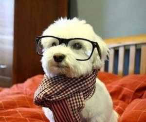 dog, nerdy, and funny image