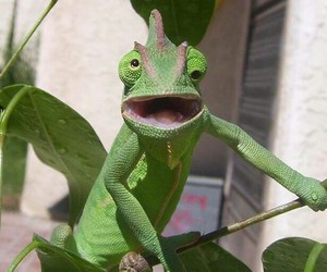 chameleon and funny image