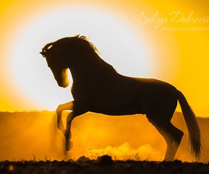 horse, sunset, and silhouette image