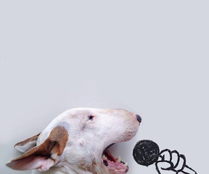 dog, funny, and sing image