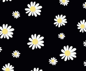 wallpaper, flowers, and black image