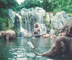 elephants, nature, and cool image