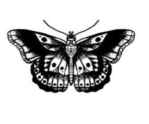 Harry Styles, butterfly, and one direction image