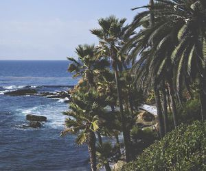 summer, palms, and sea image
