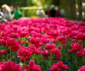 beautiful, garden, and flowers image