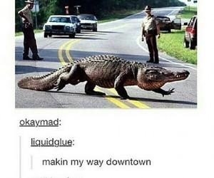 crocodile, OMG, and a thousand miles image