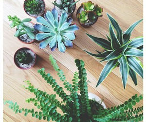 plants, beautiful, and green image